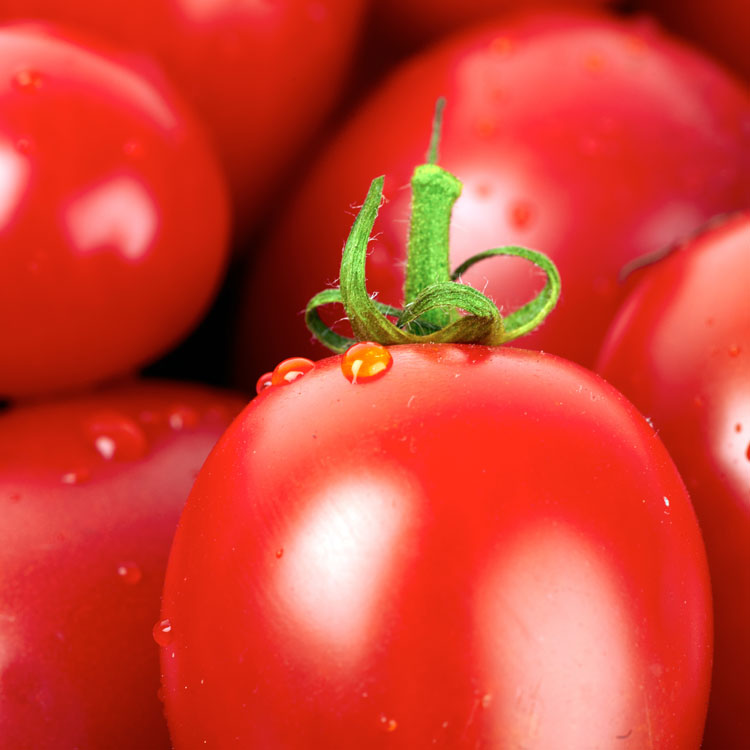 Close-up of fresh roma tomatoes with water droplets covered